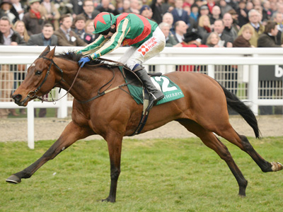 Champion Hurdle still an option for Racer