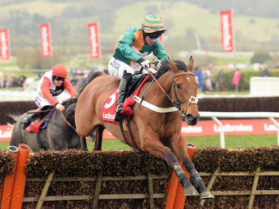 Warren Greatrex's Prestbury pointers