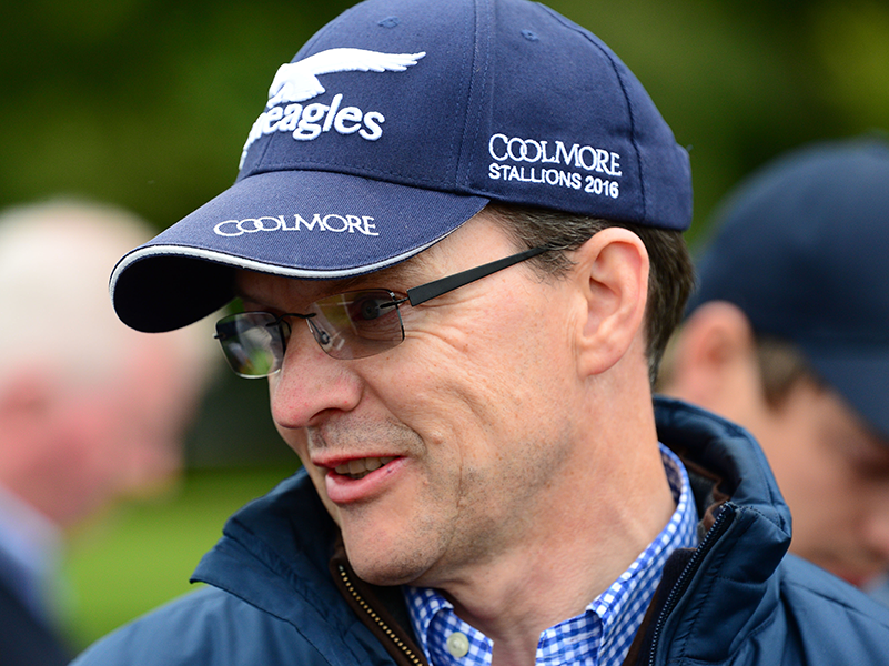 Aidan OBrien Stable Tour