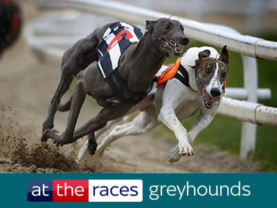 Betting racing post greyhounds results uk golf betting forum