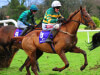 Connections hoping Blazer is tailor-made for Betfair test