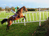 John Kiely to swerve Grand National with Carlingford Lough