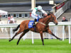 Curragh winner Van Der Decken has Royal Ascot option