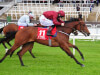 Michael O'Callaghan considers Royal Ascot for Naas-bound Spy Ring