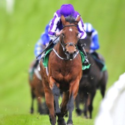 Ascot ground the question mark for Aidan O'Brien big guns