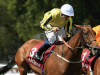 Michael Bell to swerve Gold Cup at Royal Ascot with Big Orange