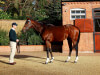 All eyes on first Royal Ascot Frankel filly in Albany Stakes