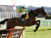 Defi Du Seuil star attraction in Triumph Hurdle possibles