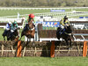 Willoughby Court denies Neon Wolf in Neptune thriller at Cheltenham