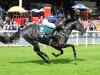 Aidan O'Brien targets Dundalk comeback for unbeaten Classic hope Caravaggio