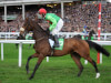 Evan Williams outlines Bet365 Gold Cup plan for Buywise