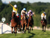 Big Orange and Frankie Dettori too strong in Henry II at Sandown