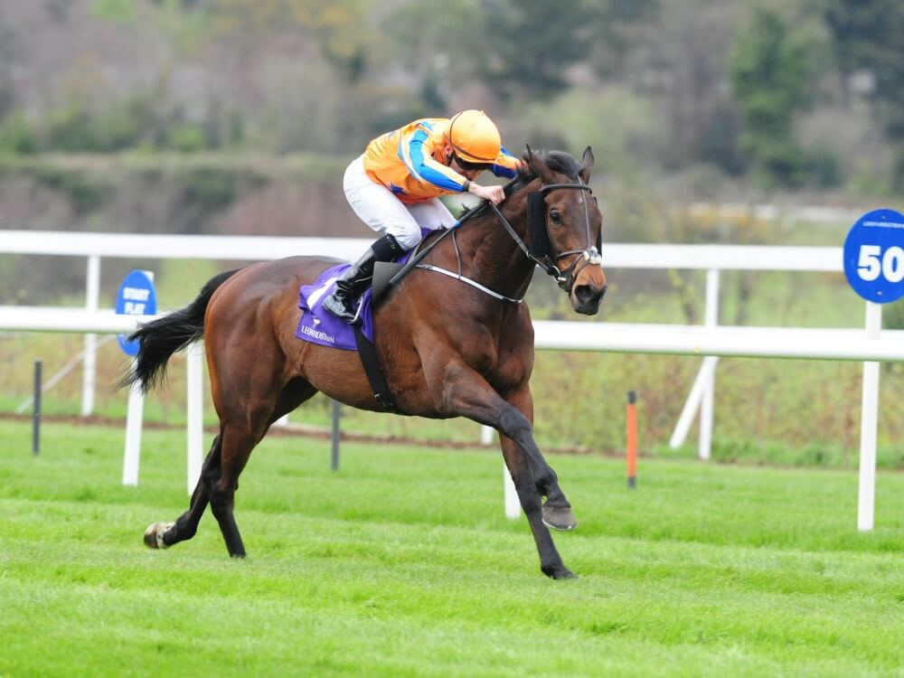 Torcedor going for Gold at Royal Ascot