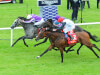 Capri and Cracksman in contention for Great Voltigeur at York