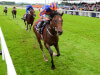 Churchill on International mission at York after Goodwood wash-out