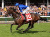 Star sprinter Harry Angel cranks up the revs for Champions Day