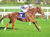 Bound rounds out treble for Aidan O'Brien at Leopardstown