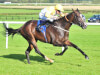 Quiet Reflection heading for sales ring following Ascot disappointment