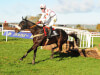 Wakea likely to have break before being prepared for Cheltenham
