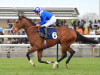 Tabarrak expected to go close on seasonal return at Doncaster
