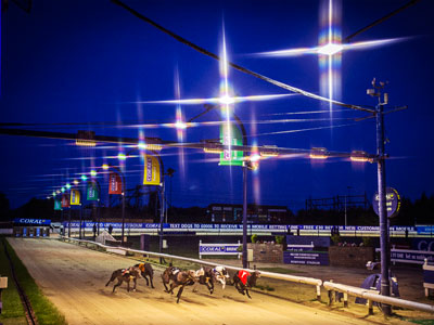 BAGS launches Live Greyhounds online